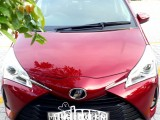 Toyota Toyota Vitz edition 3 2019 2019 Car